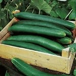 Cucumber - English Long - Organic - Each
