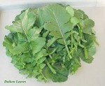 Radish - Daikon - Leaves - Organic - Bunch