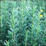 Cut Herb - Rosemary - Organic - Bag